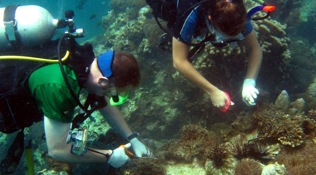Projects Abroad volunteers clear fishing nets from the coral reefs during their Conservation Project in Thailand